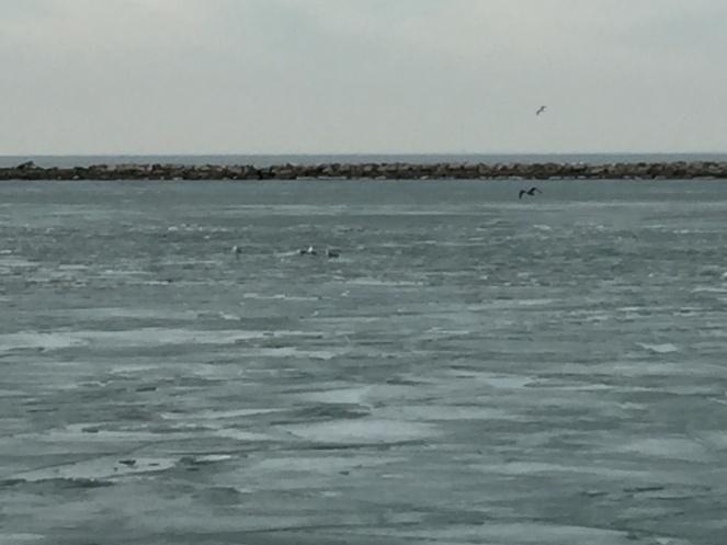 gulls cropped.jpg